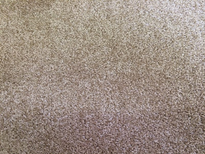 Rental Property Carpet